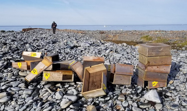 Some of the ROST nesting structures - North Brother, NS, April 26, 2020 - Alix d'Entremont photo