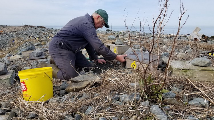 Me (Ted), setting up ROST nesting structures - North Brother, NS, April 26, 2020 - Alix d'Entremont photo