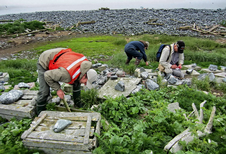 Andrew, Nigel and me counting tern nests on N. Brother, Nova Scotia - June 8, 2012 - Alix d'Entremont photo