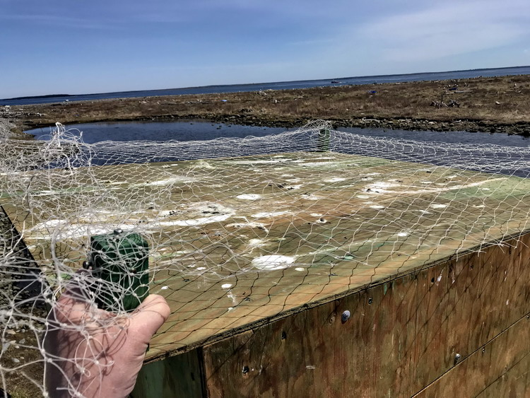 The monofilament netting - Gull Island - May 7, 2019 - Ted D'Eon photo