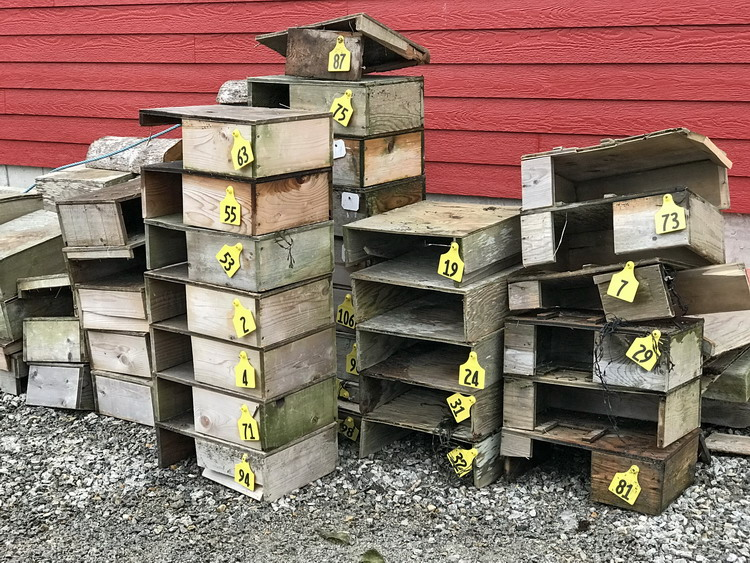 Some of the collected ROST nesting shelters, January, 2018 - Ted D'Eon photo