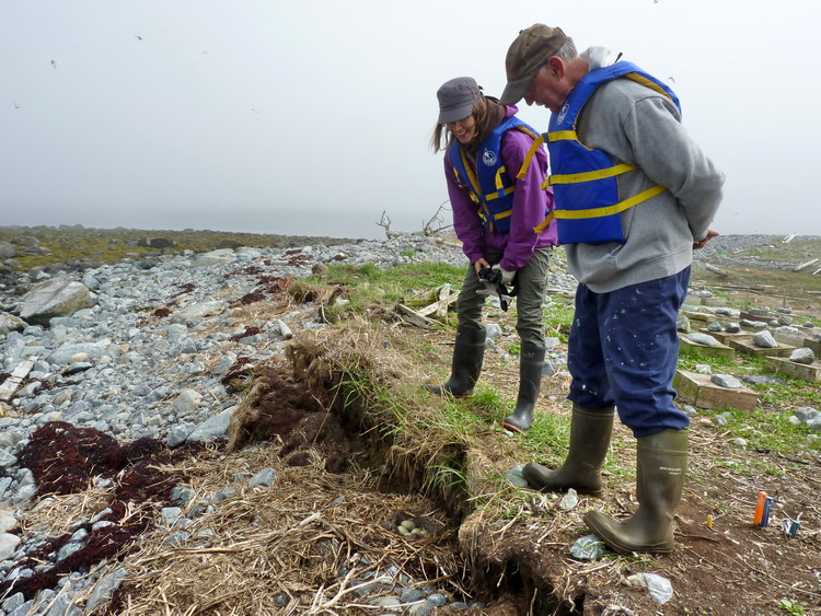 Hailey and Rémi eyeing up a Common Eider nest - N Brother, May 22, 2014 - Ted D'Eon photo