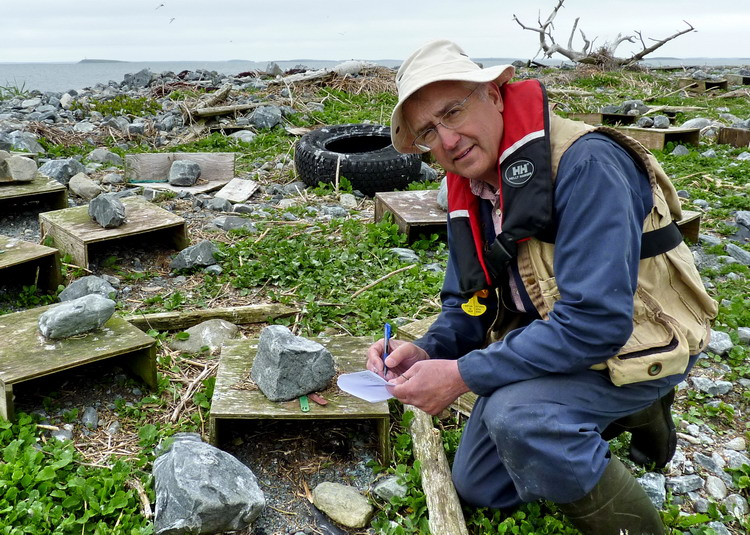 Me (Ted D'Eon), documenting the Roseate Tern nests on N Brother, May 28, 2014 - Hailey Heyens photo