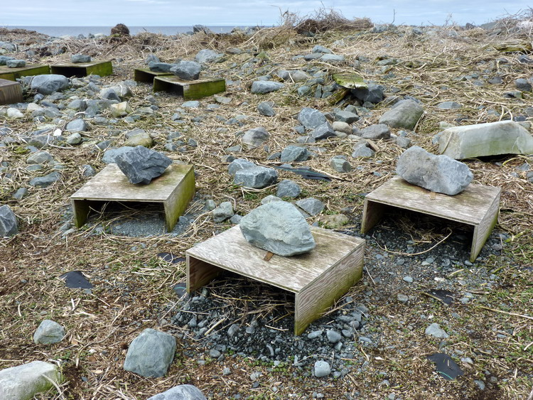 ROST nesting shelters ready for the terns - N. Brother, Apr. 30, 2015 - Ted D'Eon photo
