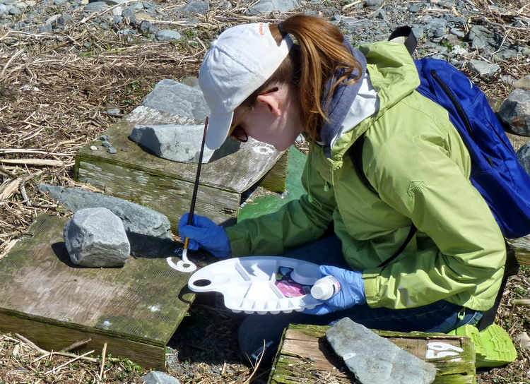 Ingrid D'Eon numbering the nesting shelters - N. Brother, May 5, 2015 - Ted D'Eon photo
