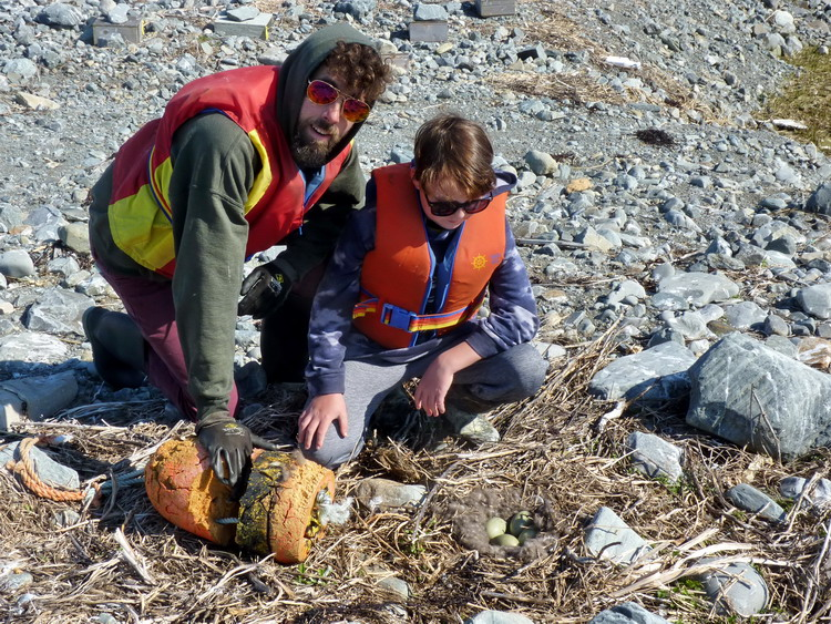 Gavin and Orson with Common Eider nest - North Brother, NS, May 20, 2020 - Ted D'Eon photo